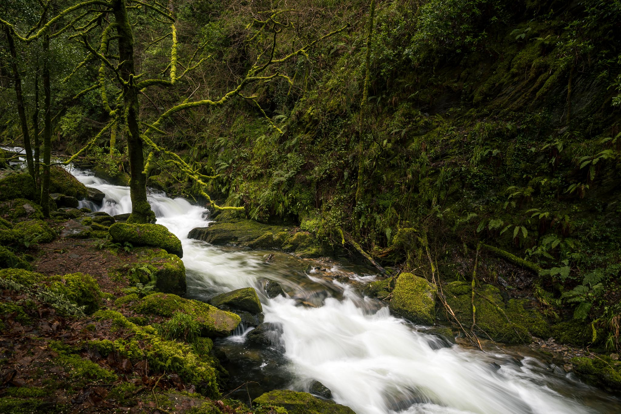 Lower Torc Waterfall Landscape Photography